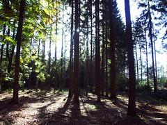 woods3 (Navas) Tags: autumn trees forest germany woods utatathursdaywalk28
