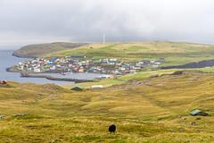 Nolsoy (Photocedric) Tags: faroe danmark sheep islands water denmark city september sea iles animal island dk ocean town europe feroe danemark nólsoy faroeislands fo