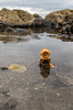 Underwater walk (Ballou34) Tags: 2017 7dmark2 7dmarkii 7d2 7dii afol ballou34 canon canon7dmarkii canon7dii eos eos7dmarkii eos7d2 eos7dii flickr lego legographer legography minifigures photography stuckinplastic toy toyphotography toys stuck in plastic underwater walk diver water rocks burntisland scotland royaumeuni gb