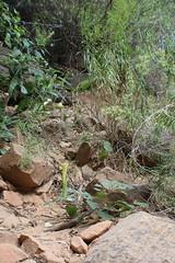 IMG_3749 (Egypt Aimeé) Tags: narrows zion national park canyons pueblos utah arizona