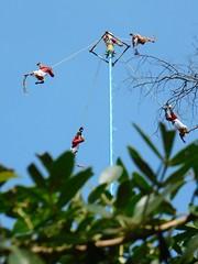 """Dance of the Papantla Flyers"", Chapultepec Park, Mexico City. (yaotl_altan) Tags: voladoresdepapantla papantlaflyers mexique mexiko мехико мексика mèxic méxico messico mexico"