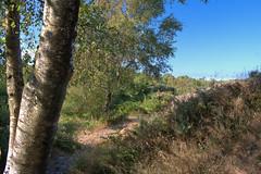 Landscape at Newtownards Lead Mines (John D McDonald) Tags: leadmines newtownards whitespots landscape countydown codown northdown northernireland ni ulster geotagged d3300 nikon nikond3300 green blue sky bluesky rock