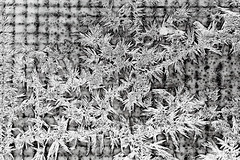 Frost pattern on a window (BryonLippincott) Tags: blair nebraska unitedstates us farm farming christmas winter snow cold farmhouse country patterns frost frosty window condensation ice crystals frozen water icy