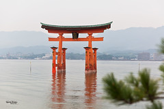 "Japan-2b-046-Miyajima - torii (david ""Djannis"") Tags: 鳥居 torii japon japan extérieur 日本 wood sea mountain hiroshima 広島 monument 宮島 miyajima eau arbre forêt"
