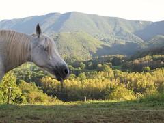 17/09/2014 sommet de Piscatel et une partie de la commune de Herran... (Dust.....) Tags: paysage cheval comminges komingisthan kommingisthan landscape