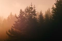 SAM_2935 (Apostol Dragiev) Tags: родопи rodopimountain rodopi mountain forest fog sunrise