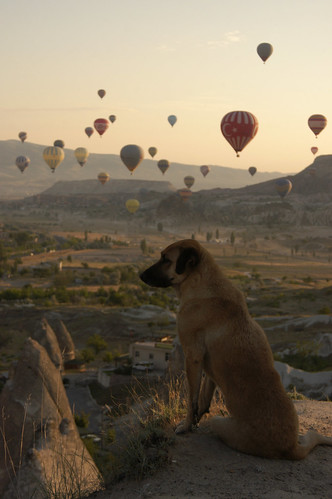 Dog with a view I