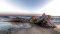 Plage de l'Espiguette (sebastienloppin) Tags: paysage mer plage wood l'espiguette camargue sea beach sunset sunrise nature seascape landscape