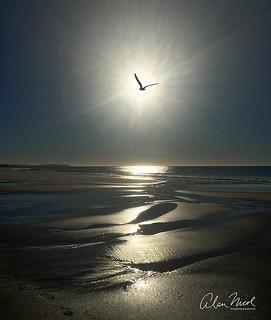 Seagull Sunrise 3