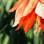 Toronto Ontario ~ Canada ~ Edwards Gardens ~ Botanical Garden - Exotic  Flower thumbnail