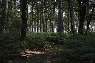 Undergrowth track