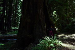 Redwoods (supercell70) Tags: people tree forest wood park old nature green redwood redwoods