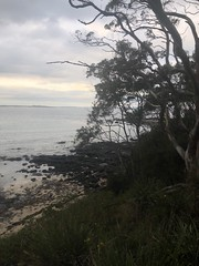 Day 2 (Emma:king) Tags: beginnerphotography framing framedbytree sealevel clearwater iphone nswbeach shore gloomy 2018 australia holiday overcast clouds afternoon evening sunset secludedbeach tree nature lookout water relax bendy cliffface beach southcoast nsw bendalong