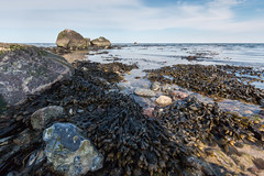 20180402-IMG_9317 (dr_knox) Tags: objekt ort fa findling ostsee strand tang