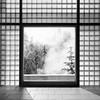 Brief Winter Window (Aaron Bieleck) Tags: hasselblad500cm 120film analog 6x6 square film filmisnotdead hasselblad mediumformat wlvf winter pdx portland ohsu oregonhealthandsciencesuniversity window bw blackandwhite shadows trees forest 60mmct architecture