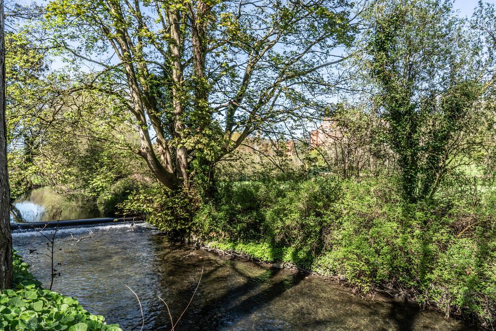 VISIT TO THE NATIONAL BOTANICAL GARDENS [GLASNEVIN DUBLIN]-138588