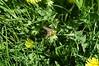 20180421_Mondsee_G_021 (Tauralbus) Tags: mondsee oberösterreich upperaustria austria österreich oberoesterreich fruehling spring