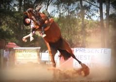 Guilherme Tellechea (Eduardo Amorim) Tags: gaúcho gaúchos gaucho gauchos cavalos caballos horses chevaux cavalli pferde caballo horse cheval cavallo pferd pampa campanha fronteira quaraí riograndedosul brésil brasil sudamérica südamerika suramérica américadosul southamerica amériquedusud americameridionale américadelsur americadelsud cavalo 馬 حصان 马 лошадь ঘোড়া 말 סוס ม้า häst hest hevonen άλογο brazil eduardoamorim gineteada jineteada