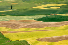 Rolling Hills of Palouse (Amar Raavi) Tags: palouse rollinghills landscape wheat farm agriculture outdoors travel tree green brown washington usa pattern geology