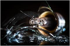 """Light bulb _ MM _ """"Inside electronic"""" (Werner D.) Tags: domiplanf2850mm zwischenring wernerd macromondays insideelectronic macro makro nahaufnahme detail unschärfe bokeh dof depthoffield lightbulb"""
