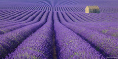 [Explore 09/07/2018] Valensole - Provence - France (chassamax) Tags: 1x2 cabane canon6d champ champdelavande color couleur europe field formatpaysage france landscape lavande lavende lavender maxence maxenceboyer maxenceboyerphoto monochrome nature paca panorama paysage provence purple ruin ruine summer valensole wwwmaxenceboyerphotocom été