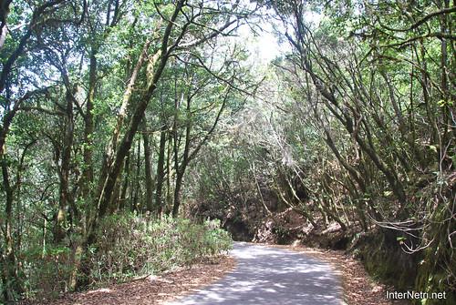 Національний парк Гарахонай, Гомера, Канарські острови  InterNetri  0707