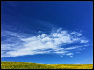 Clouds and canola fields