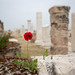 Single poppy growing in the ruins