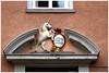 Pharmacy in Goettingen (na_photographs) Tags: einhorn unicorn fabelwesen phantasy door tür apotheke göttingen