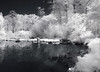Japanese Garden BGG Monochrome (©Delos Johnson) Tags: lifepixel nir infrared bbg garden samsung nx30