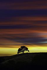 Focus and Simplicity (Omnitrigger) Tags: clouds tree coe henry state park lonetree henrycoestatepark sunset burn clouddeck landscape nature lightshow longexpo ndfilter