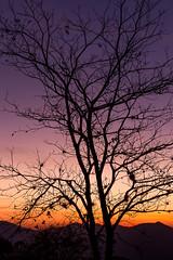 As cores da alvorada em Três Picos - Nova Friburgo (mariohowat) Tags: trêspicos parqueestadualdetrêspicos novafriburgo natureza riodejaneiro brasil brazil sunrise alvorada nascerdosol canon6d