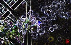 Petit délire lumineux du 14 juillet (3/3) (mamnic47 - Over 9 millions views.Thks!) Tags: effetphotoshop effetsdelumières 14072018 loggia plantes 6c8a8305 vigne contours
