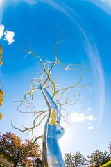Roxy Paine (Thomas Hawk) Tags: america forestpark missouri mo museum roxypaine saintlouisartmuseum stlouis usa unitedstates unitedstatesofamerica artmuseum sculpture tree trees fav10