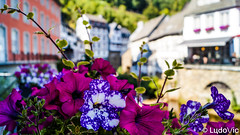 Monschau 2018 - 07 (Lцdо\/іс) Tags: monschau montjoie flower fleurs street romantic deutschland allemagne allemande germany juillet july 2018 rue oldcity citytrip