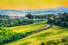 Gold falls from a sunsetting sky... (Howard Brown Photographic) Tags: sunset vineyard vineyards olive grove tree trees tuscany toscana tuscan italy italia italian farm farmland sun photoart digital art