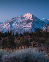 Bloom (Yegor00) Tags: marcadamus mountains sunrise sierras california blue snow trees nikon rrs light nature landscape travel glow peak bishop