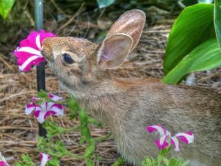 Hippity the rabbit