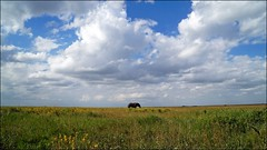 alone!? (tor-falke) Tags: africa afrika afrique african africalandscape afrikanwildlife wild wildlife landschaft landscape paysage safari fotosafari photosafari sky clouds blue bluesky elefant elephant éléphant gras natur nature flickrtorfalke flickr torfalke ngc