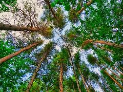 P1060322 (Denis-07) Tags: arbre