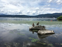 Suwa lake #5 (Fuyuhiko) Tags: suwa lake 諏訪湖 長野県 諏訪