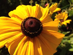 Summer Gardening YYC (Mr. Happy Face - Peace :)) Tags: macromondays hmm floral closeup garden