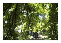 _K000803 (Jordane Prestrot) Tags: ♋ jordaneprestrot madrid retiro parc parque jardin arbre tree árbol