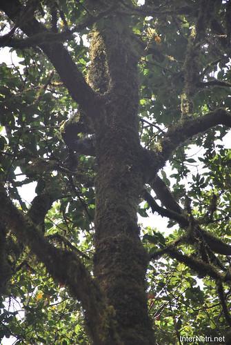 Національний парк Гарахонай, Гомера, Канарські острови  InterNetri  0699