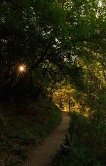Of my solitude (pete ramirez) Tags: canon tree travel trail 2018 sunrise nature landscapes roadtrip