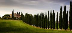"A Closeup ""Poggio Covili"" (Beppe Rijs) Tags: 2018 europa italien juli sommer toskana europe italy july summer tuscany"