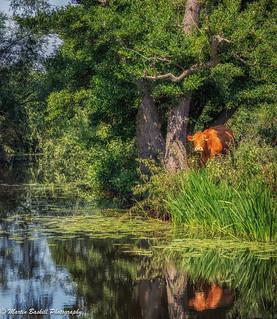 Walk along the River Soar