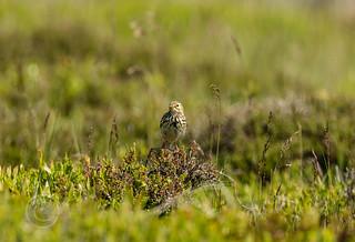 Wildlife around Magdalen June 2018 073