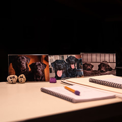 Happy Workspace 199/365 (Watermarq Design) Tags: pups blacklabs workspace desk favoriteplace 365project