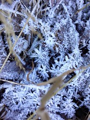 Frost...Winter 2017 (MichelaLapo) Tags: frost ice winter